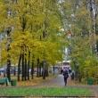 В лесопарках Нижнего Новгорода высадят 19 тысяч сеянцев