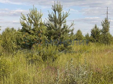 rabochiy-poselok-gidrotorf-balahninskiy-municipalnyy-okrug фото